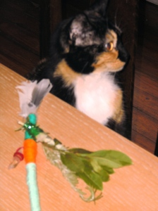 Marmalade rejects my handcrafted prayer arrow as a cat toy. Bitch.