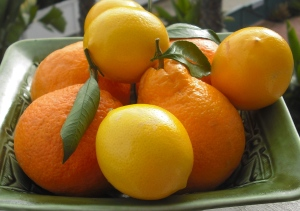 Meyer lemons and satsuma oranges