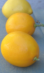 A cross between an lemon and an orange, Meyer lemons deliver sweeter flavor and less acidity than standard lemons.