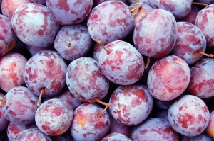 Texas A&M researchers give plums two thumbs up.